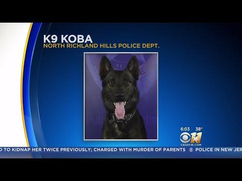 Ayo - North Richland Hills Police K9 Dog shot in gunfire exchange.