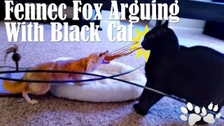 Cat and Fennec Fox Arguing