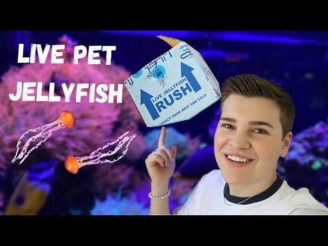 UNBOXING LIVE *JELLYFISH* (moon Jellyfish Care)