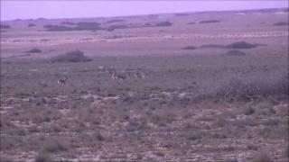 Garacad vs Wildlife