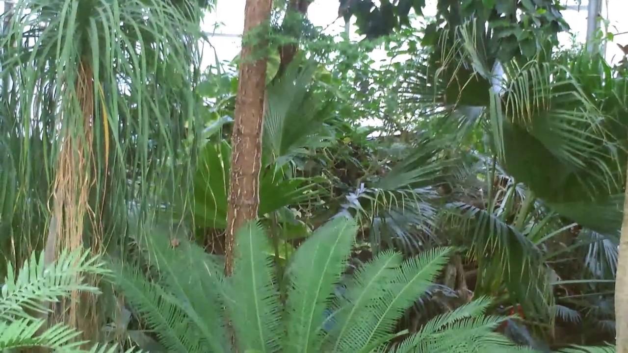 la serre du jardin des plantes lille sur une musique de heitor villa lobos - Jardin Des Plantes Lille
