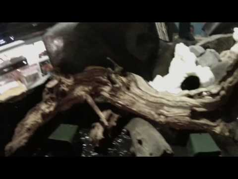 How to make your own backround/waterfall for your vivarium - Part II