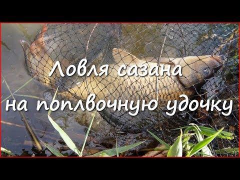 снасти для ловли сазана на поплавочную удочку