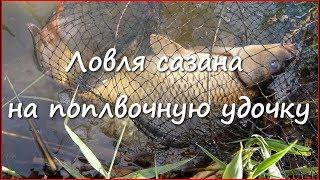 Ловля сазана на поплавочную удочку весной(Видео о ловли сазана весной на поплавочную удочку. Рыбалка получилась интересной, увлекательной и результа..., 2016-06-05T13:01:52.000Z)
