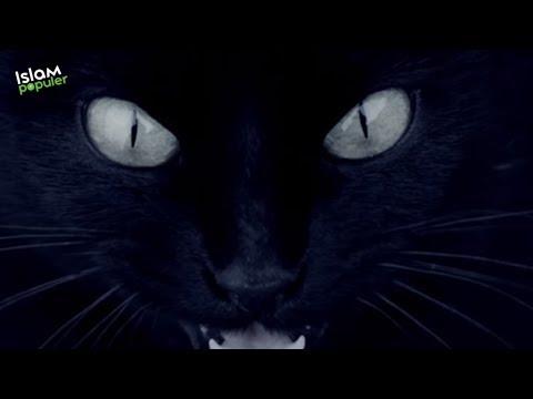 Jika Hewan Ini Bersuara di Tengah Malam, Berarti Ada Hantu!