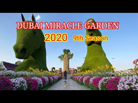 DUBAI MIRACLE GARDEN 2020 || The largest natural flower garden in the world