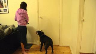How To Train Your Dog To Close The Door Using Targeting