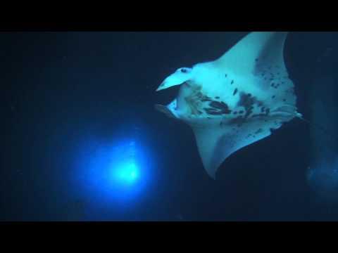 Night diving with giant Manta rays, Kona, Hawaii