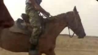 лошадь бежит почти до 60 км в час