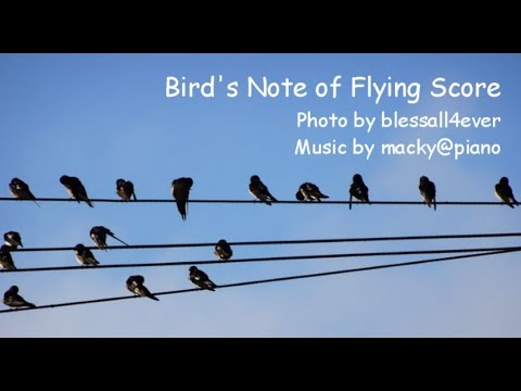 Collab【Bird's Note Of Flying Score🎼】blessall4ever & Macky@piano(Original Piano Music)