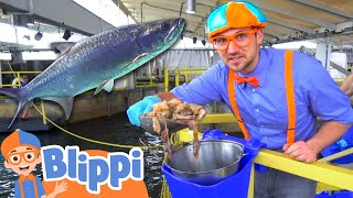 Blippi Visits The Florida Aquarium | Sea Animals With Blippi | Educational Videos For Kids