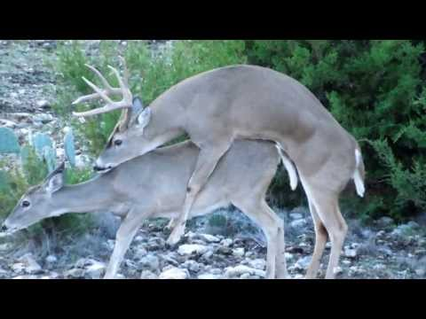 Rifle Buck Season Deer Hunting 2012 - Hunter from YouTube · Duration:  10 minutes 43 seconds