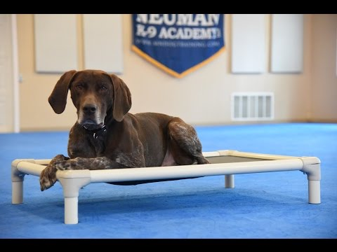 Jake (German Shorthaired Pointer) Boot Camp Dog Training Demonstration