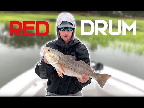 Fishing For Red Drum Inshore | NC Red Drum Fishing