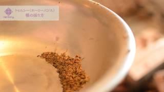 福岡県東峰村小石原でハーブを生産しています。 春の種まきに向けて採種...