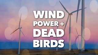 VERIFY: Do wind turbines kill a large number of birds?