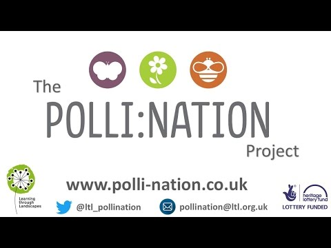 A year of Polli:Nation with St Albans School, Havant