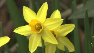 Spring Gardening Quick Tips: Color