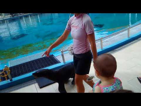 Complete Pink Dolphin Show Sentosa Singapore