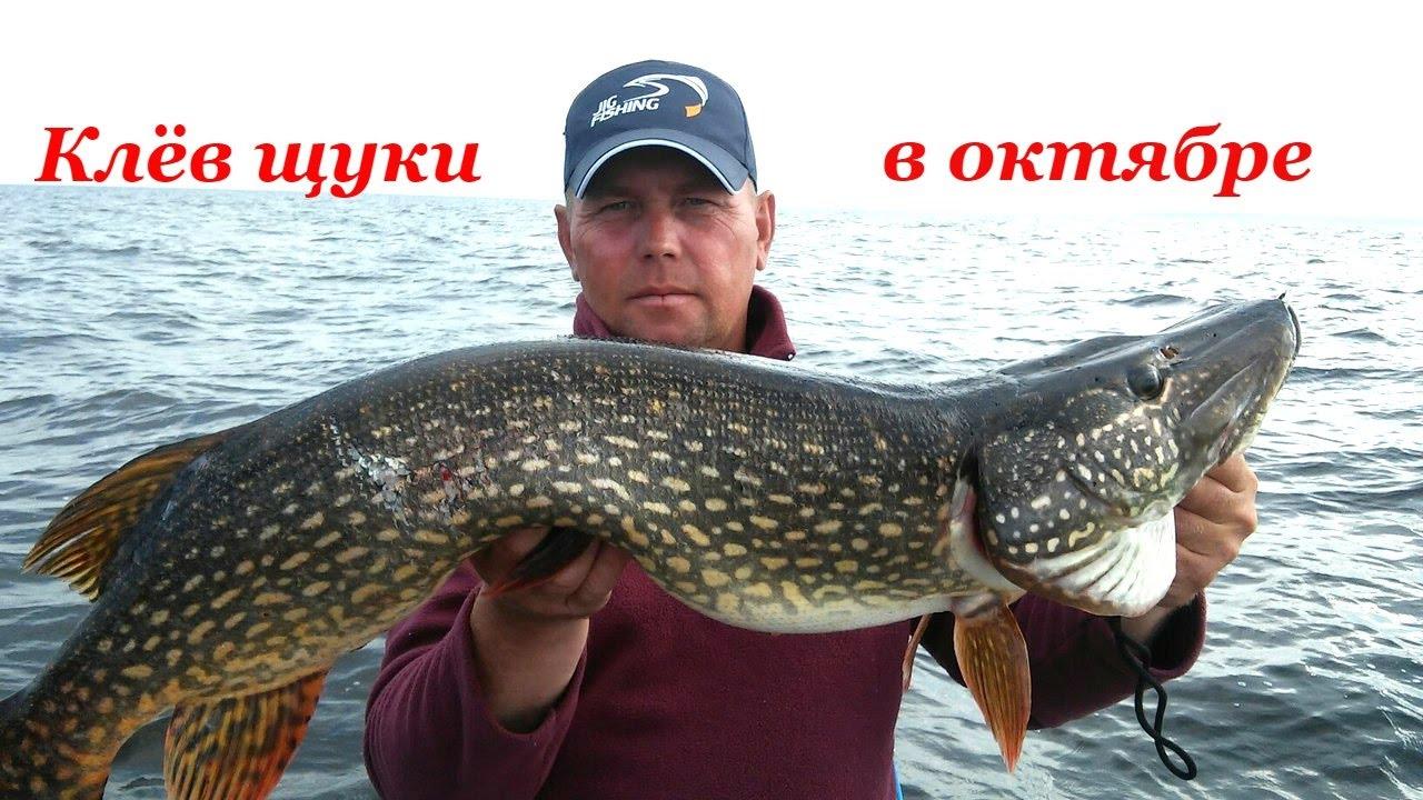 Рыбалка на Рыбинском Водохранилище октябрь 2016 .
