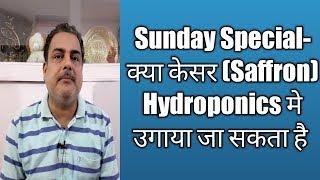 Sunday Special- क्या केसर Saffron Hydroponics मे उगाया जा सकता है । Saffron in Hydroponic farming