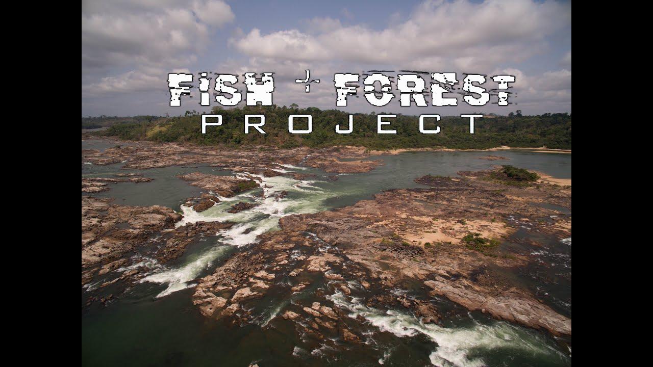 Xingu River Fish