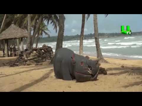 High visa fees deter tourists from visiting Ghana - Expert