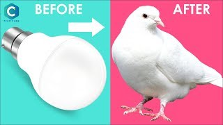 Pigeon making | Pigeon Making with Cotton | Pigeon Making | #cottoncrafts #crafts