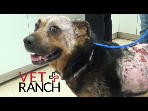 Dog with Chemical Burns gets Makeover!