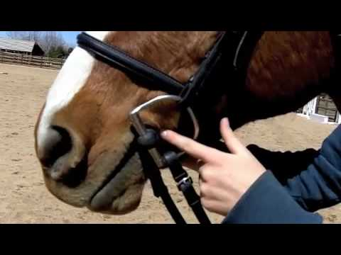 Horse Riding Safety Check