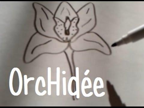 Dessiner Une Orchidée