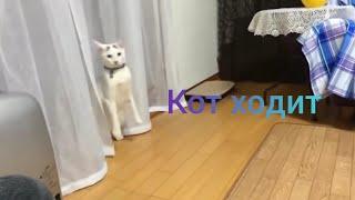 Кот ходит на задних лапах