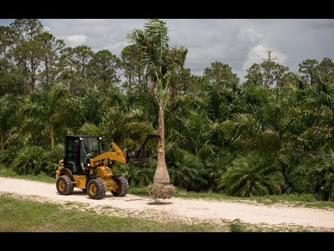 Cat® 903D Compact Wheel Loader | Overview