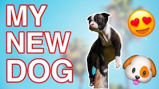 MEET MY NEW DOG WATSON! *CUTE PUPPY*