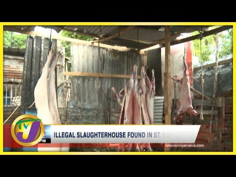 Illegal Slaughterhouse Found in St. Catherine Jamaica   TVJ News - August 14 2021