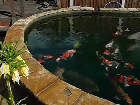koi pond 8000 gallons youtube