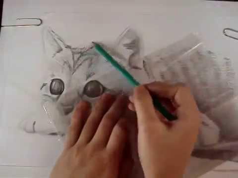 Sr Molina  Dibujo blanco y negro Gatito  YouTube