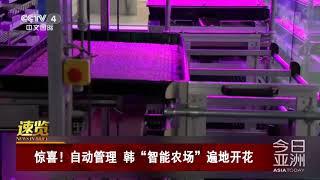 """[今日亚洲]速览 惊喜!自动管理 韩""""智能农场""""遍地开花  CCTV中文国际"""