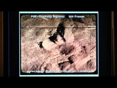 PGF Munns Report Video 2A Trackway.mp4