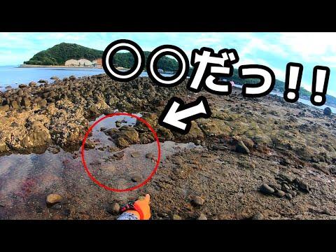 #1 潮が引いた海の水溜りにありえない生物が・・・