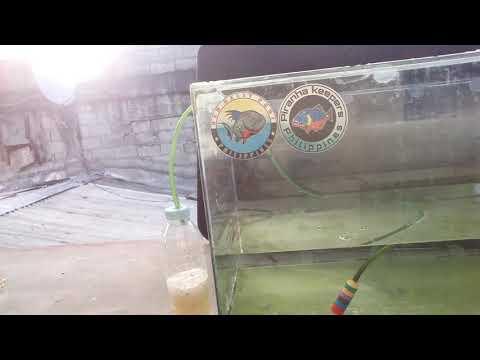 BUTZ DIY: emergency aerator using potato and hydrogen peroxide