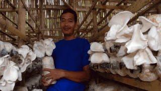 Tutorial Lengkap Bisnis Budidaya Jamur Tiram