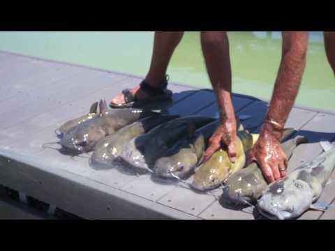 Fishing report Utah Lake - 23 June 17