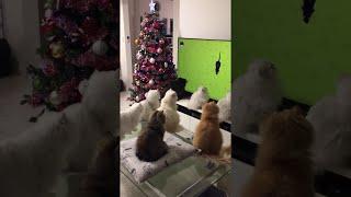 Cats Watch TV Together || ViralHog