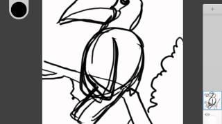 how to draw animal Hornbill