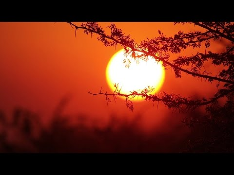 African Sunset Soft Focus - Royalty Free HD Stock Video Footage.