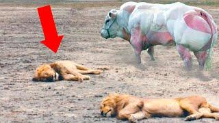 Они Были Обречены! Животные, Которые Спасли Жизни Других Животных