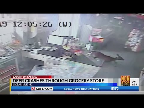 Pet Central - How scary is this: a deer crashes into a North Carolina store