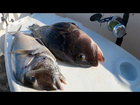 OFFSHORE WRECK FISHING!!! Long Island NY