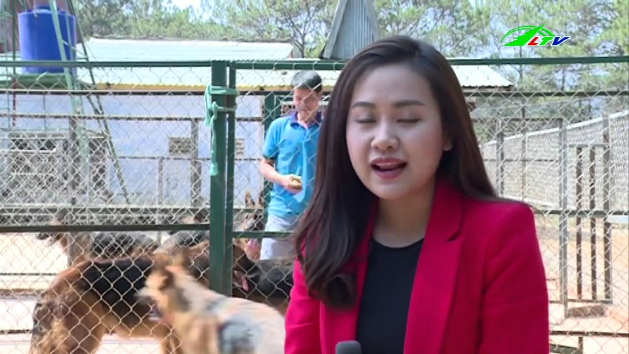 Robin Hill: Thánh địa của loài chó | LTV